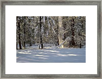 Snow Falling Off Cedars Framed Print