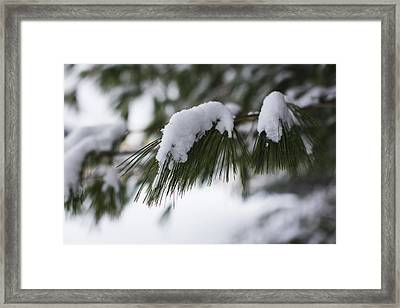 Framed Print featuring the photograph Snow Falling On The White Pines by Andrew Pacheco