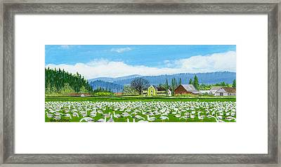 Snow Geese And A Farm House Framed Print by Bob Patterson
