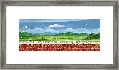 Snow Geese And Tulips Framed Print by Bob Patterson