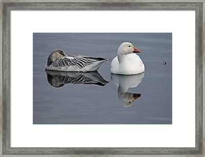 Snow Geese At Bosque Framed Print