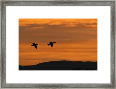 Snow Geese - Bosque Del Apache Framed Print by SharaLee Art