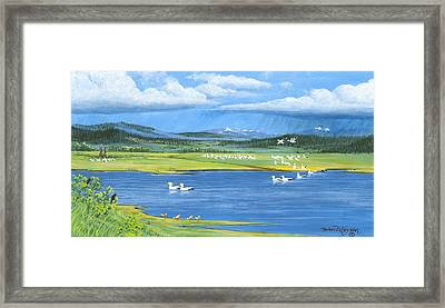 Snow Geese  Tidal Flats Framed Print by Bob Patterson