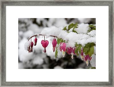 Snow Heart Framed Print