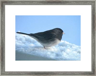 Snow Hopping #1 Framed Print