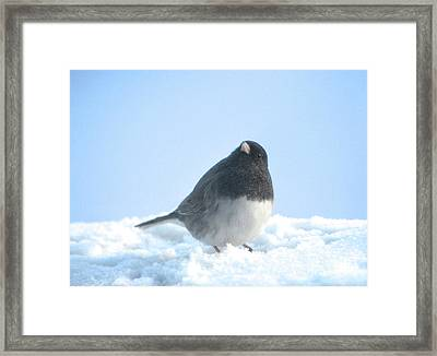 Snow Hopping #2 Framed Print