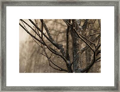 Snow In The Air - Framed Print