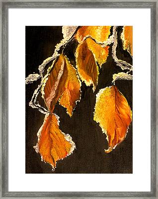 Snow Lace Framed Print by Connie Tom