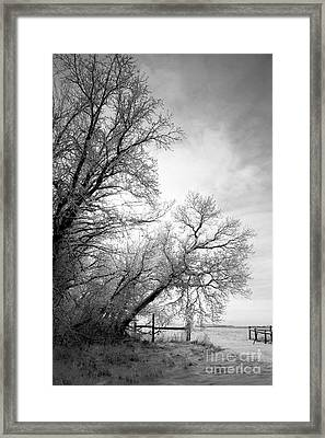 Snow Lace Framed Print by Julie Lueders