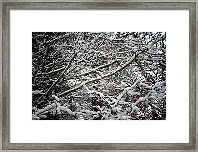 Snow Laden Trees Framed Print by Greg Simmons