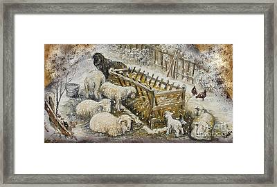 Snow Lambs Framed Print