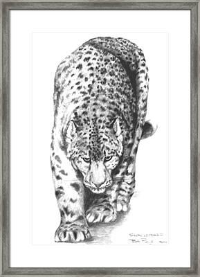 Snow Leopard Framed Print by Bob Patterson