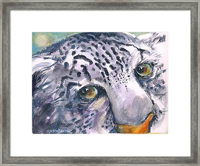 Snow Leopard Framed Print by Mary Armstrong