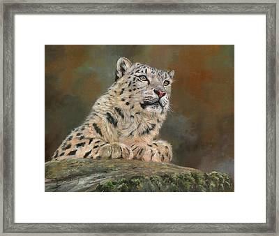 Snow Leopard On Rock Framed Print by David Stribbling