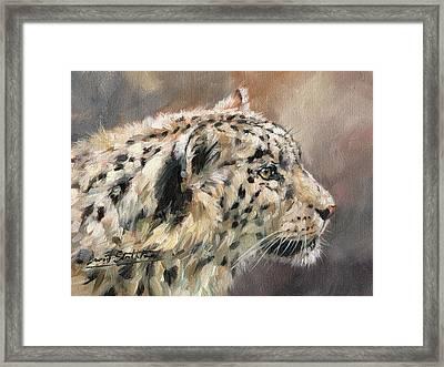 Snow Leopard Study Framed Print by David Stribbling