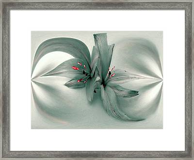 Snow Lilies Framed Print by Irma BACKELANT GALLERIES