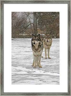 Framed Print featuring the photograph Snow Mates by Shari Jardina
