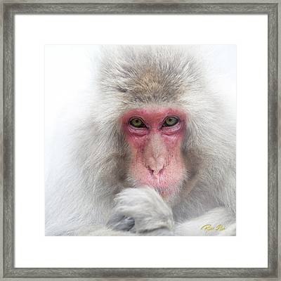 Framed Print featuring the photograph Snow Monkey Consideration by Rikk Flohr