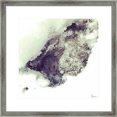 Snow Mouse Framed Print