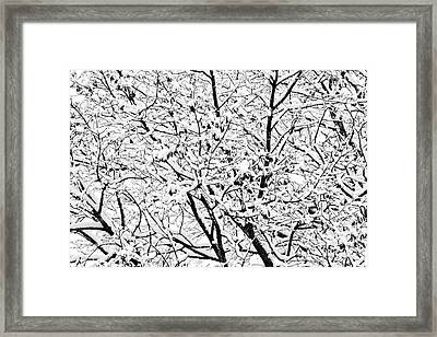 Framed Print featuring the photograph Snow On Branches by Lars Lentz