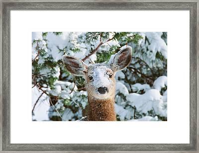Snow On Doe Framed Print