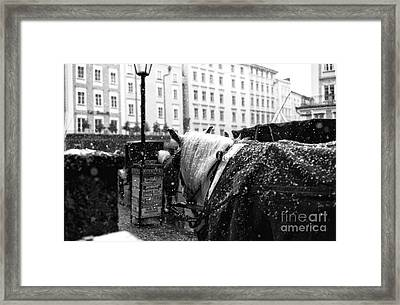 Snow On His Mane Framed Print by John Rizzuto