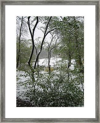 Snow On Spring Buds Framed Print by Garth Glazier