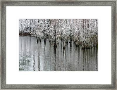 Snow On The Cypresses Framed Print by Suzanne Gaff
