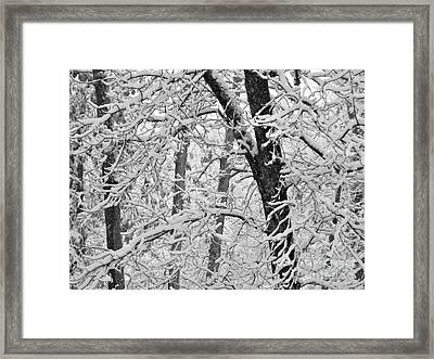Snow On The Trees In Black And White Framed Print by Mary Ann Weger