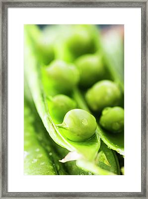 Snow Peas Or Green Peas Seeds Framed Print by Vishwanath Bhat