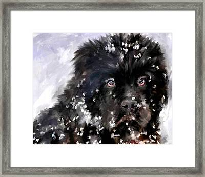 Snow Play Framed Print