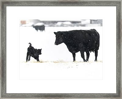 Snow Play Framed Print by Mike Dawson