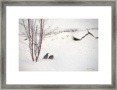 Snow Quail Framed Print