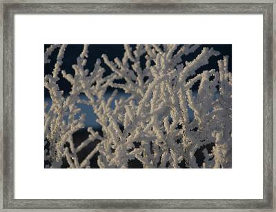Snow Scean 4 Framed Print