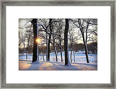 Snow Starred Grove Framed Print by Kathy M Krause