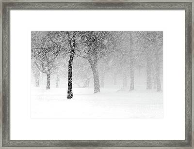 Snow Storm At Starved Rock Framed Print
