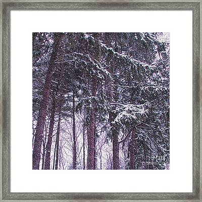 Snow Storm On Pines Framed Print