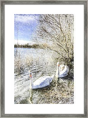 Snow Swans Art Framed Print