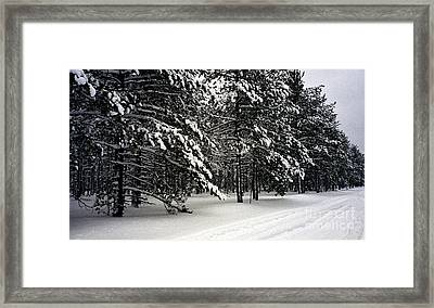 Snow Trail Framed Print by Cathy Weaver