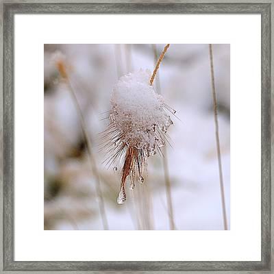Snow Transfiguration Framed Print