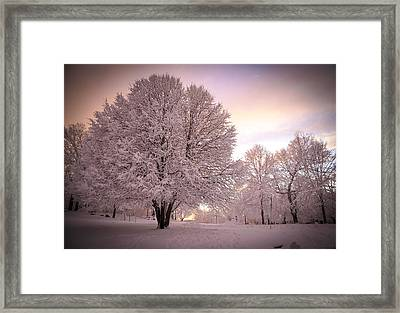 Snow Tree At Dusk Framed Print