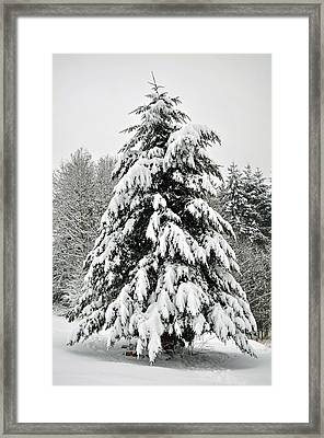 Snow Tree Framed Print by Matthew Adair