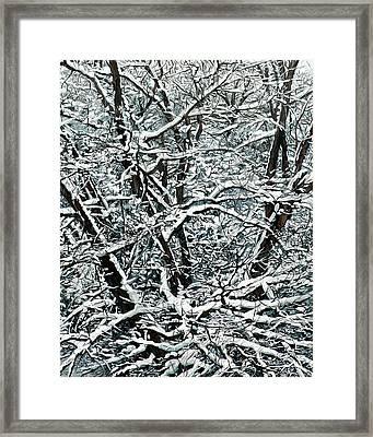 Snow Tree Framed Print by Nadi Spencer