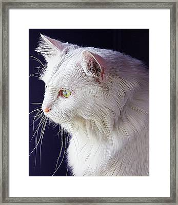 Snow White Cat Framed Print