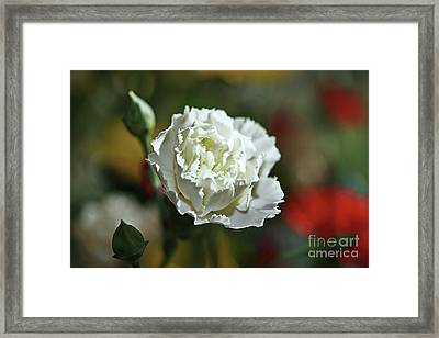 Framed Print featuring the photograph Snow White by Stephen Mitchell