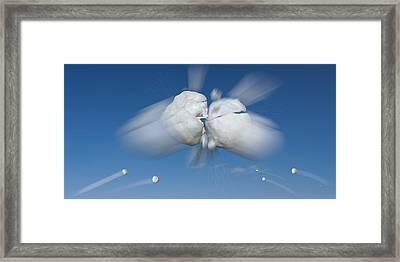 Snowball Flight Framed Print by Steve Gadomski