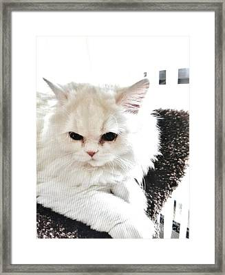 Framed Print featuring the photograph Snowball Is 92 Year Old Widows Cat by Marsha Heiken