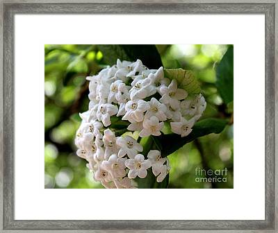 Framed Print featuring the photograph Snowbell by Erica Hanel