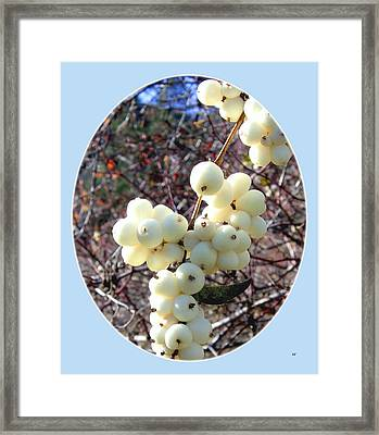 Framed Print featuring the photograph Snowberry Cluster by Will Borden