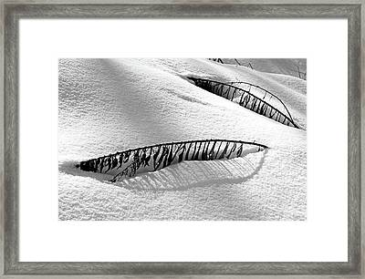 Snowbound Framed Print by Debbie Oppermann